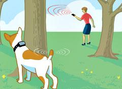 Collares para perros GPS - Localizador GPS para perros