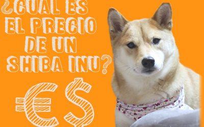 Comprar un Shiba Inu. Precio y consejos.