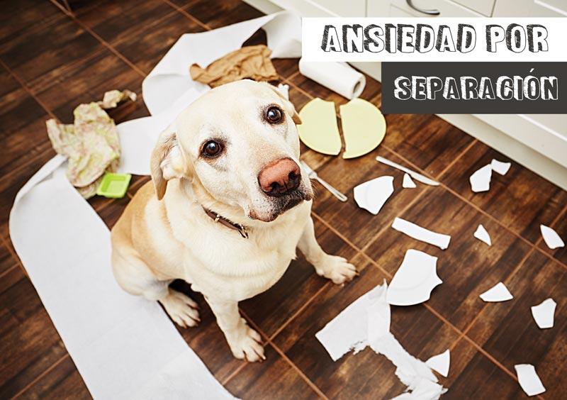 ansiedad por separacion - perro destroza casa
