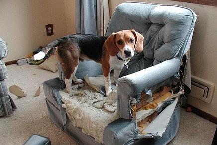 ansiedad por separacion perros