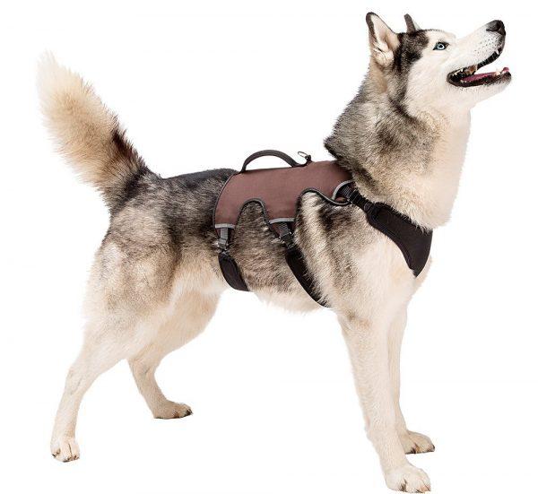 arnes-3-puntos-perro