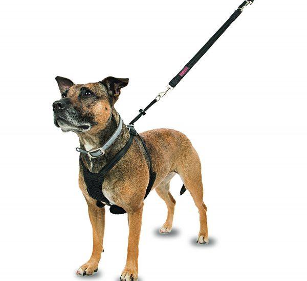 arnes-adiestramiento-perro