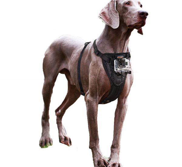 arnes-para-perro-mediano