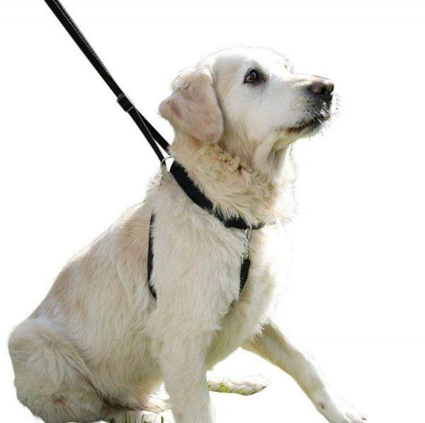 arnes-perro-anti-tirones