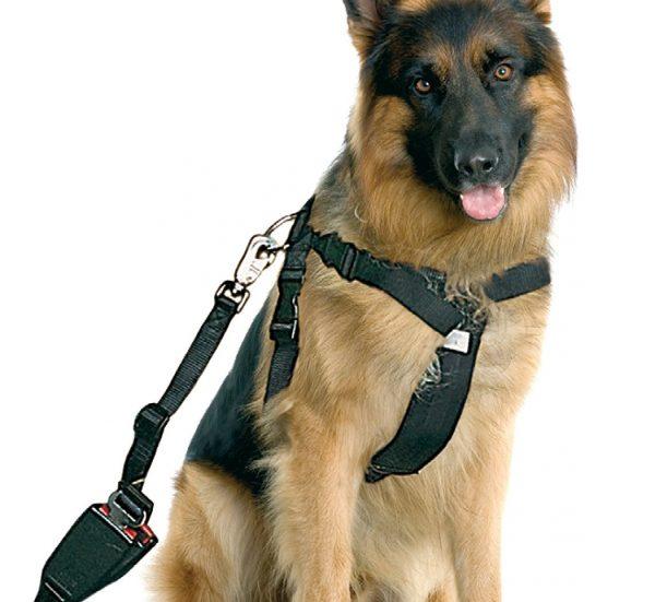 arnes-seguridad-perros