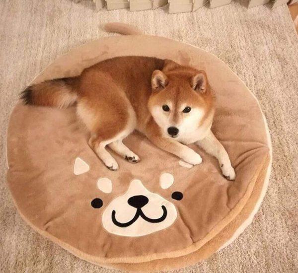 Mejor cama para perros Shiba Inu